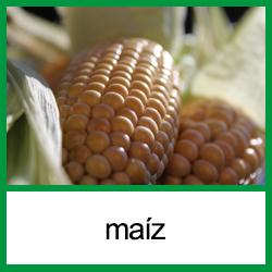 Alergia al maiz